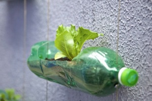 f36a386248634a66_vertical-garden-bottles-sao-paulo-3